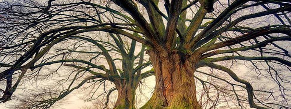 Lebensbaum_W&E